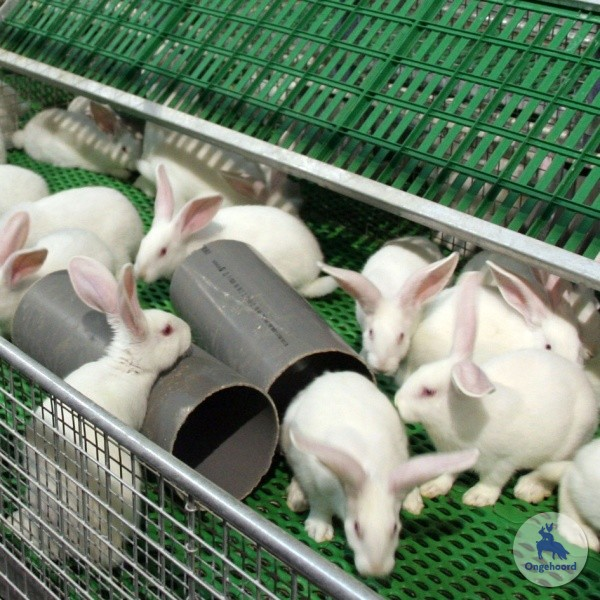 konijnenhouderij